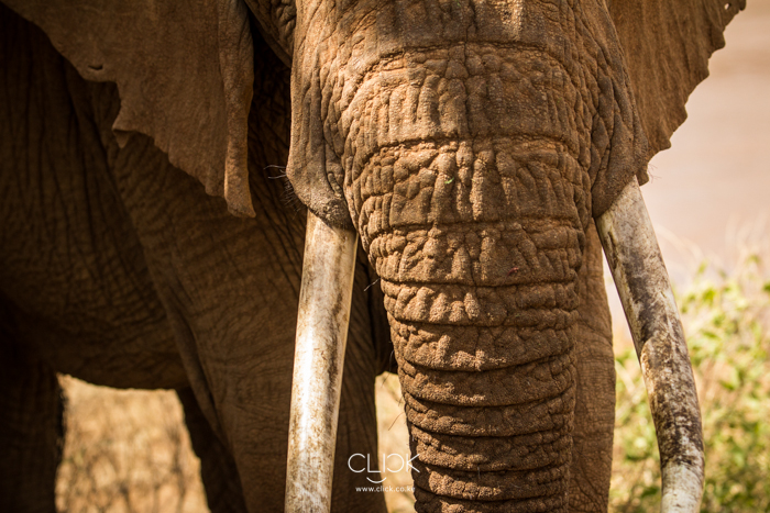 Samburu_National_Park-12