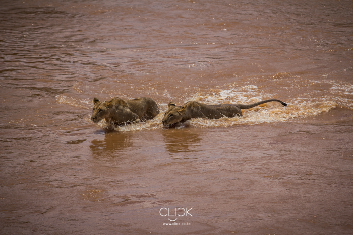 Samburu_National_Park-15