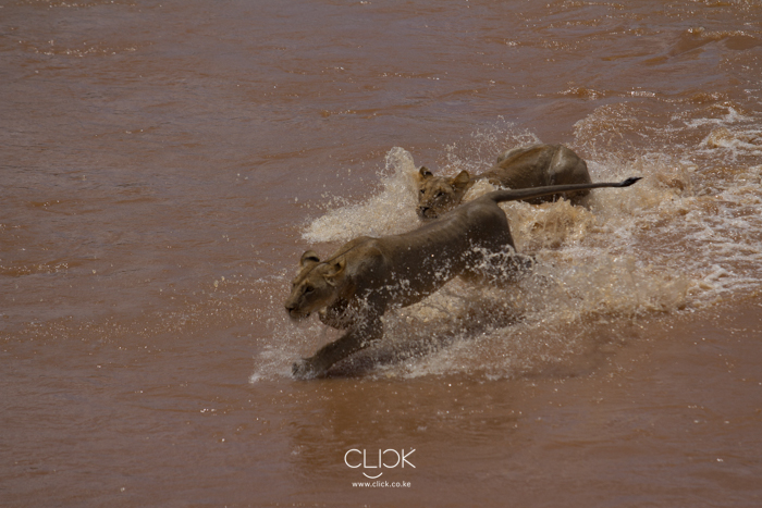 Samburu_National_Park-16