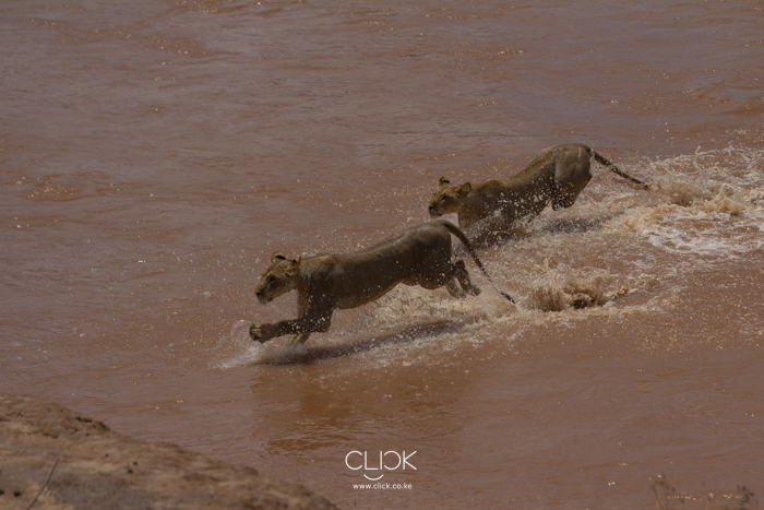 Samburu_National_Park-17