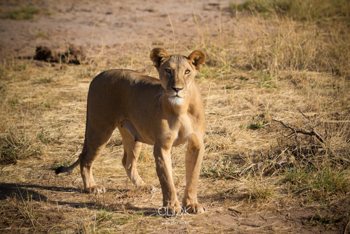 Samburu_National_Park-5