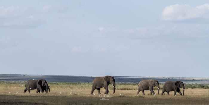 Amboseli_Onetouch_Live-13