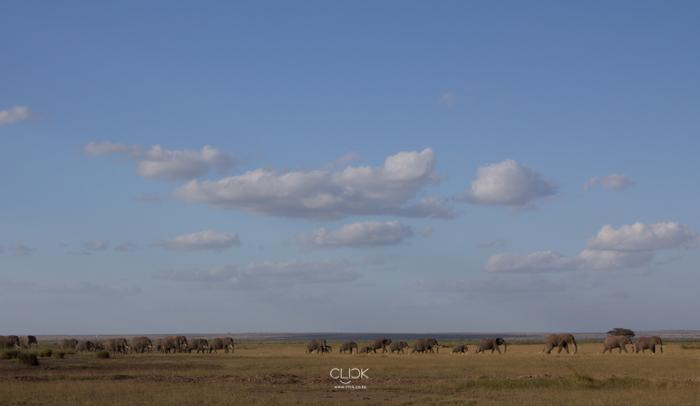 Amboseli_Onetouch_Live-14