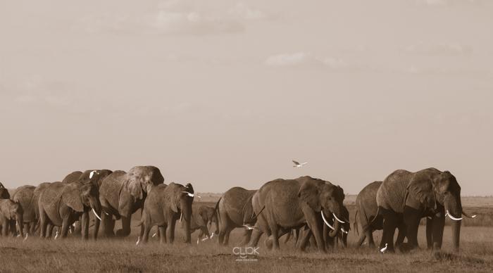 Amboseli_Onetouch_Live-16