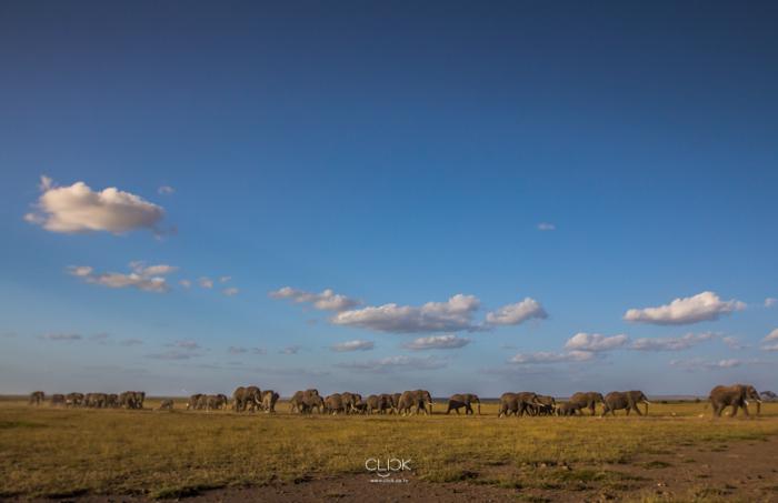 Amboseli_Onetouch_Live-18