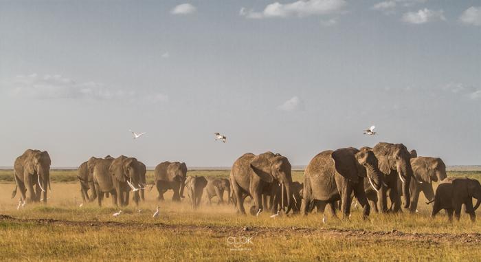 Amboseli_Onetouch_Live-19