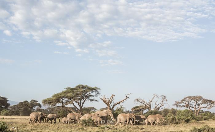 Amboseli_Onetouch_Live-33
