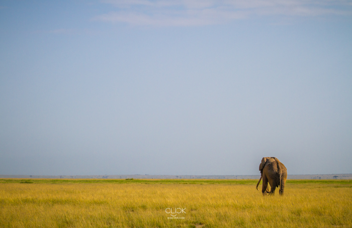#OnetouchLive Amboseli – Part 2