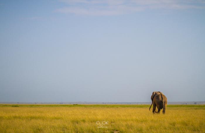 Amboseli_Onetouch_Live-37