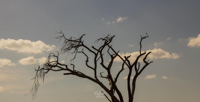 Amboseli_Onetouch_Live-7