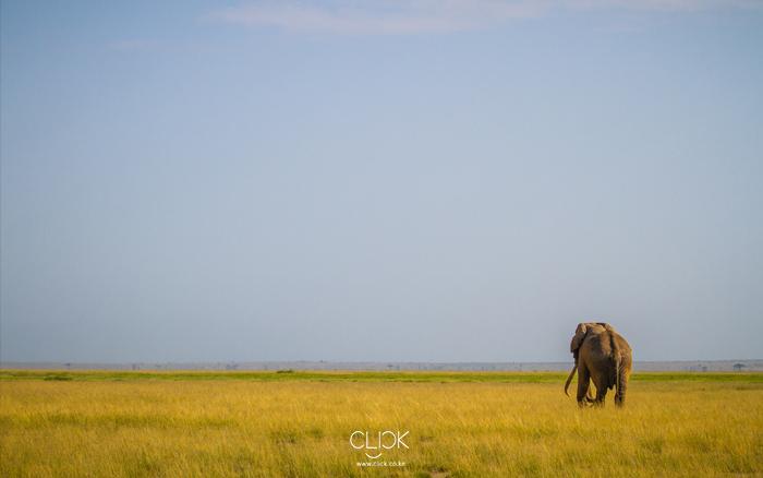 African Screens 42 – Amboseli Tusker