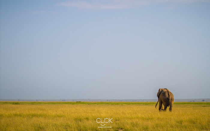 African-Screens-Wallpapers-Amboseli-Elephant-Blog700px