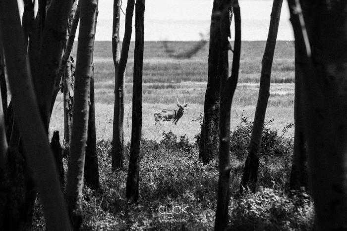 Lake_Nakuru-16