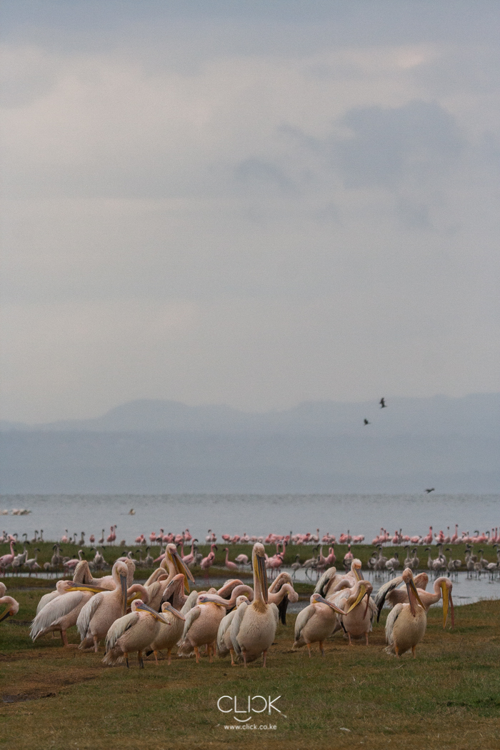 Lake_Nakuru_Flood-6