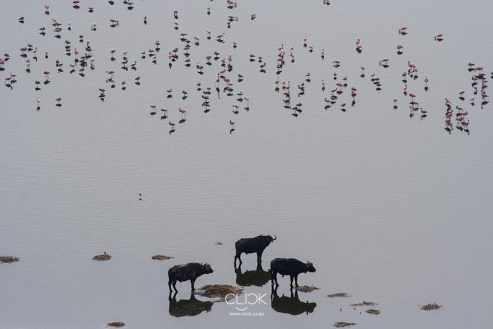 Lake_Nakuru_Flood-8