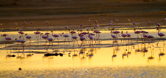 Lake_Magadi-6