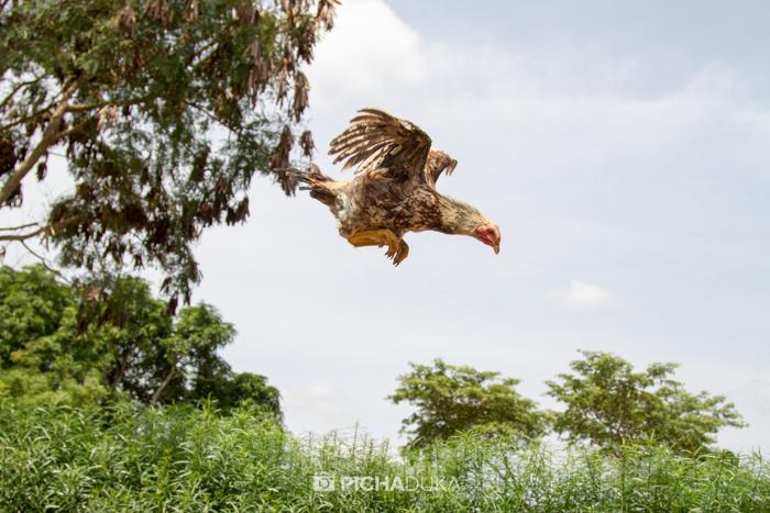 Farm_Africa_Kitui_by_Mwangi_Kirubi-14