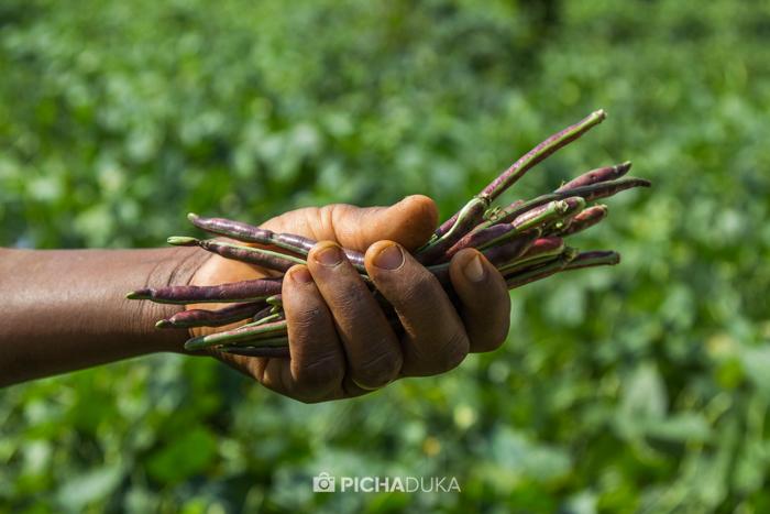 Farm_Africa_Kitui_by_Mwangi_Kirubi-3