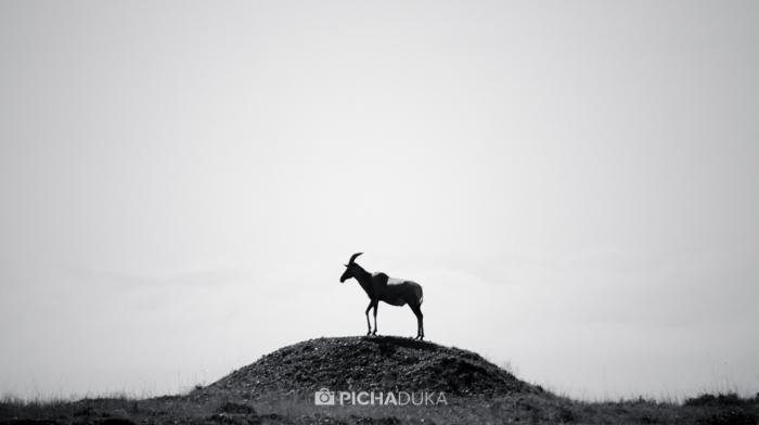 Masai_Mara-by-Mwangi_Kirubi-1