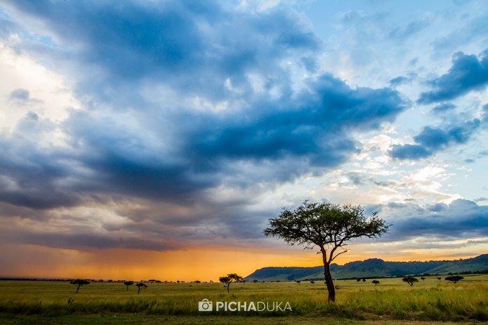 Masai_Mara-by-Mwangi_Kirubi-10