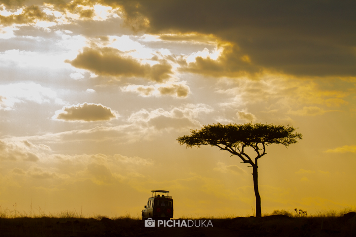 Masai_Mara-by-Mwangi_Kirubi-16