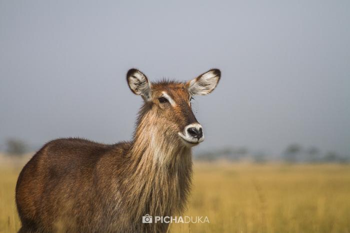 Masai_Mara-by-Mwangi_Kirubi-17