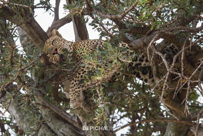 Masai_Mara-by-Mwangi_Kirubi-39
