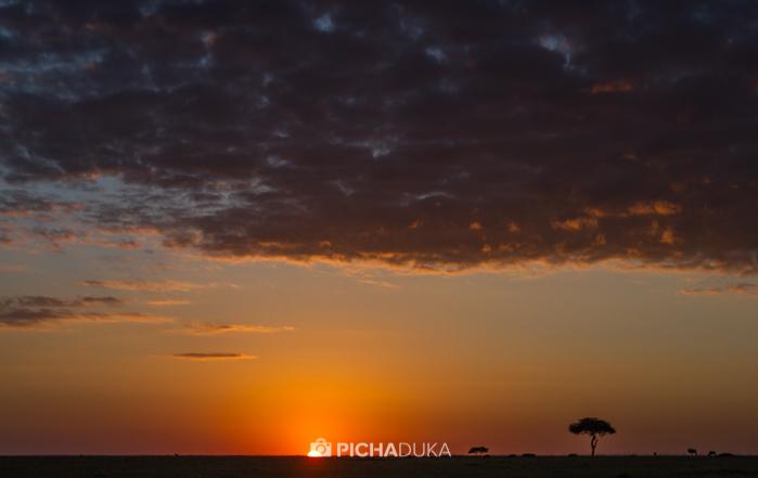 Masai_Mara-by-Mwangi_Kirubi-45