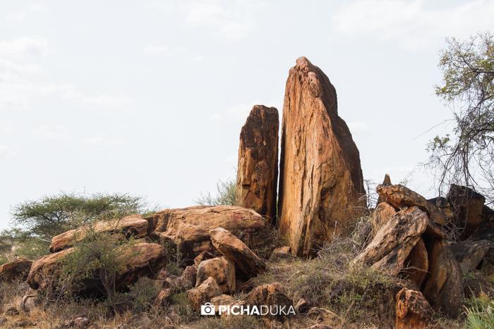 Meru-National-Park-Mwangi-Kirubi-14