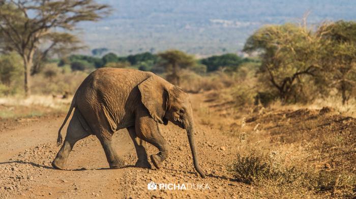 Meru-National-Park-Mwangi-Kirubi-47