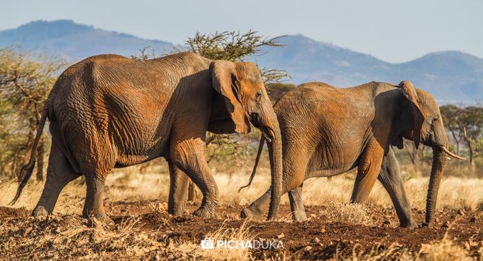 Meru-National-Park-Mwangi-Kirubi-48