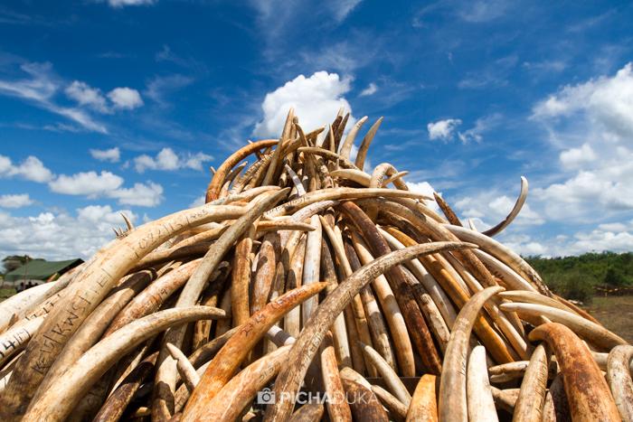 Ivory-Burn-Kenya-21