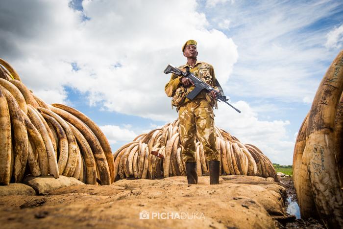 Ivory-Burn-Kenya-3
