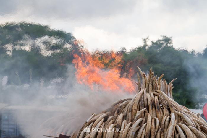 Kenya-Ivory-Burning-27