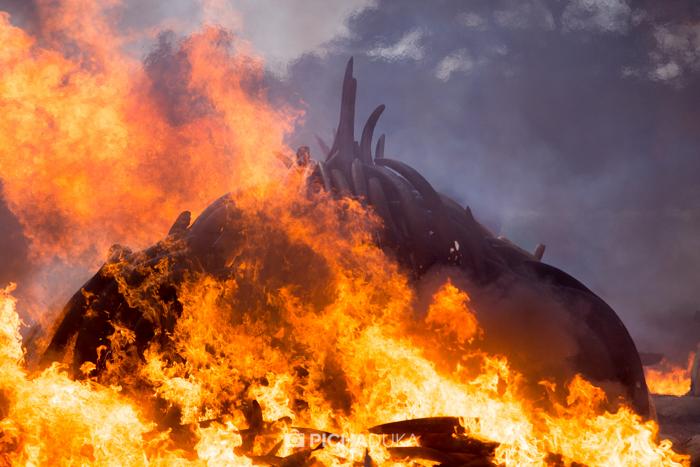 Kenya-Ivory-Burning-35