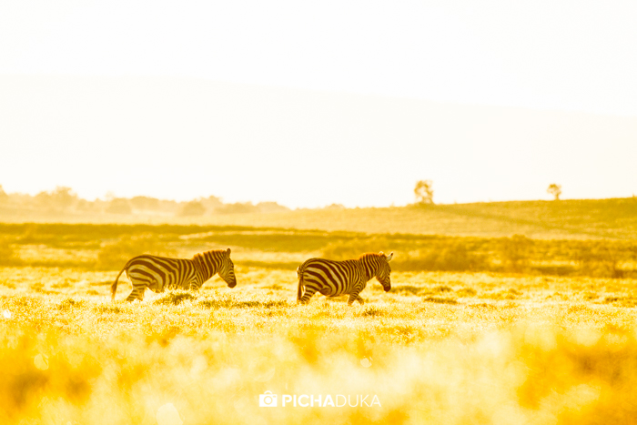 Zebras roam the plains in Hell's Gate National Park on 9th May 2016.