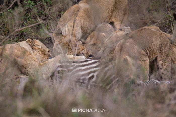 Nairobi-National-Park_Mwangi-Kirubi-7