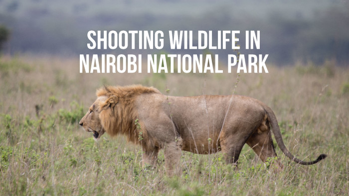 Tips for Shooting Wildlife in Nairobi National Park