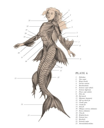 Detailed drawing of Siren Oceanus