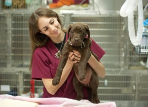 A Veterinary Assistant holds a puppy in a veterinary hospital