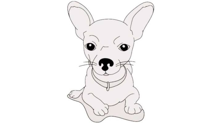 how-to-draw-a-chihuahua_13