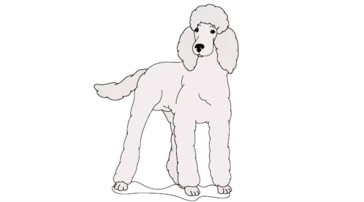 how-to-draw-a-poodle_01