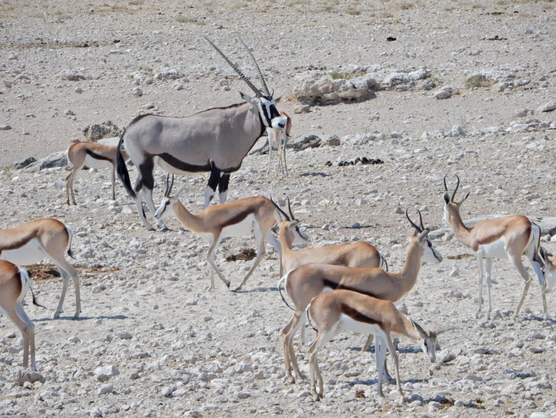 Namibie en mai