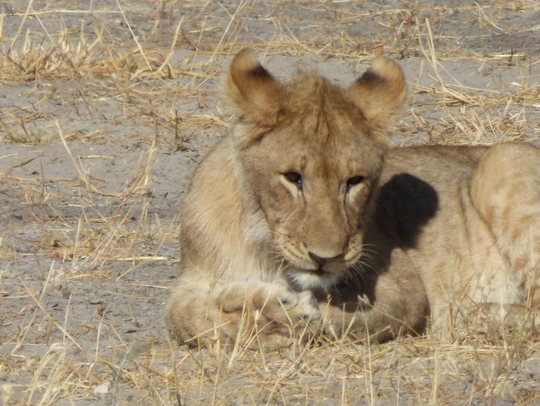 Etosha safari en Namibie