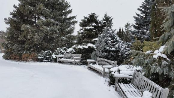 PHOTO: Fresh snow highlights the different textures found throughout the Garden.