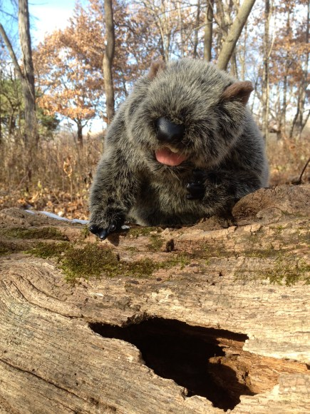 PHOTO: Botanical Bill looking into a tree trunk's hole.