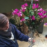 Behind-the-Scenes featured orchids