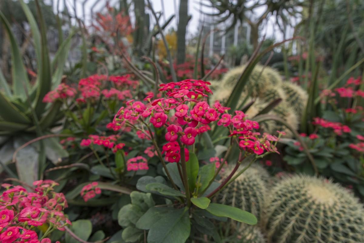 Floraciones de invierno | Blog de Flores de Wollongong