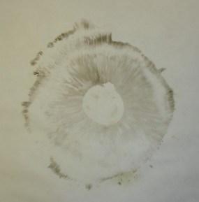 PHOTO: Mushroom spore print.