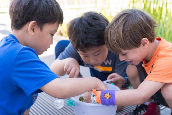 PHOTO: Three young boys peek into a bucket full of lake water looking for life.